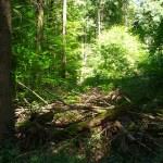 La Foresta Nera