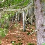 Titisee-Feldsee-Schluchsee - Feldsee-Foresta.jpg