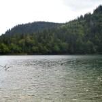 Titisee-Feldsee-Schluchsee - Feldsee-lago.jpg