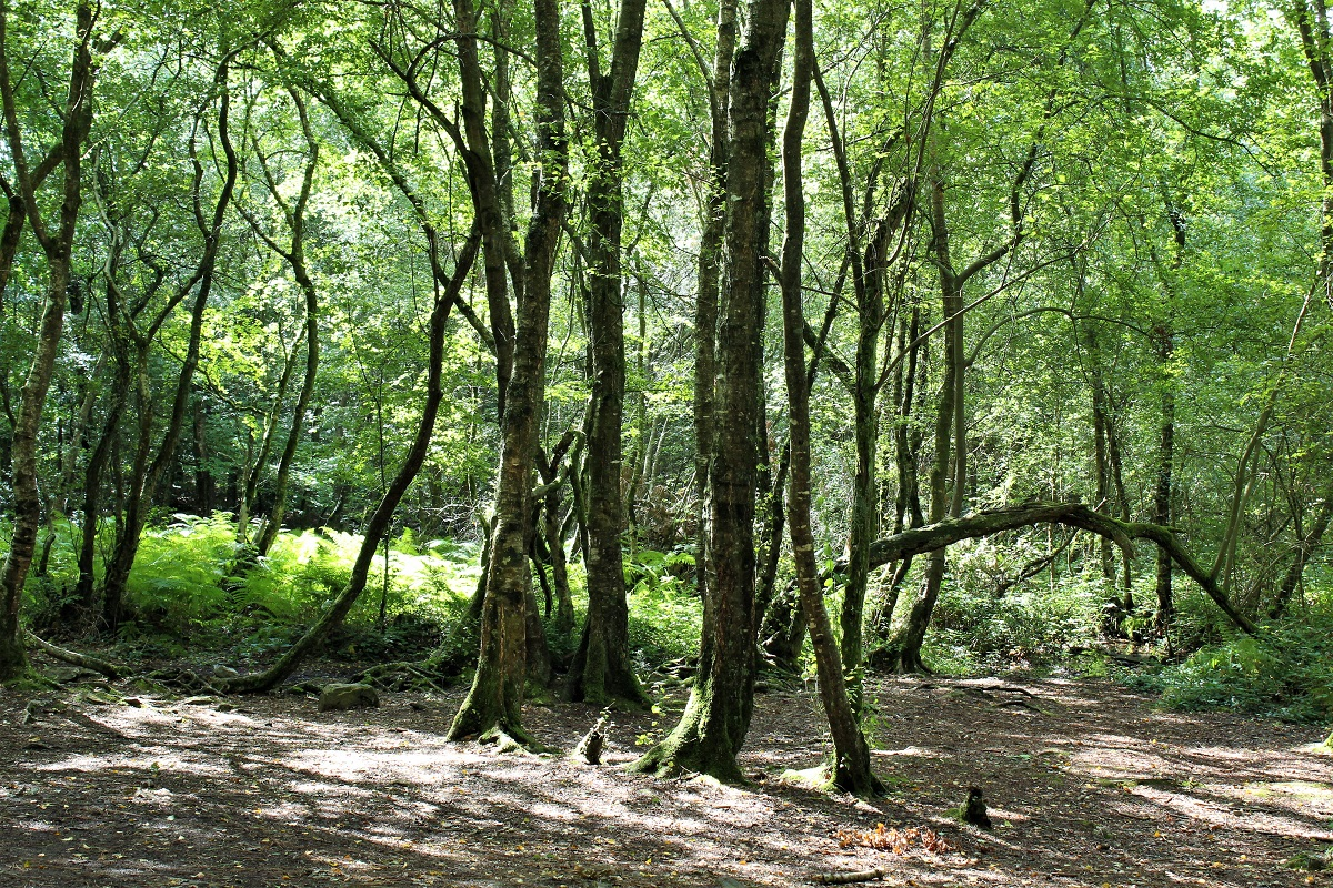 Foresta-di-Paimpont - Foresta-di-Paimpont