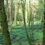Huelgoat - Huelgoat-fitta-vegetazione.jpg