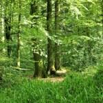 Huelgoat - Huelgoat-il-verde-cammino.jpg
