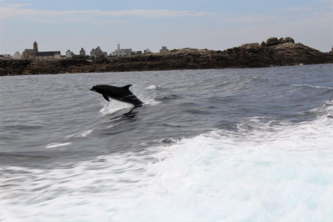Ile-de-Sein - Ile-de-Sein-saluto-dei-delfini-2.jpg