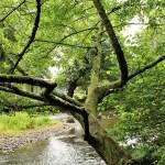 Pont-Aven - pont-aven-bois-damour-alberi-sullaven-2.jpg