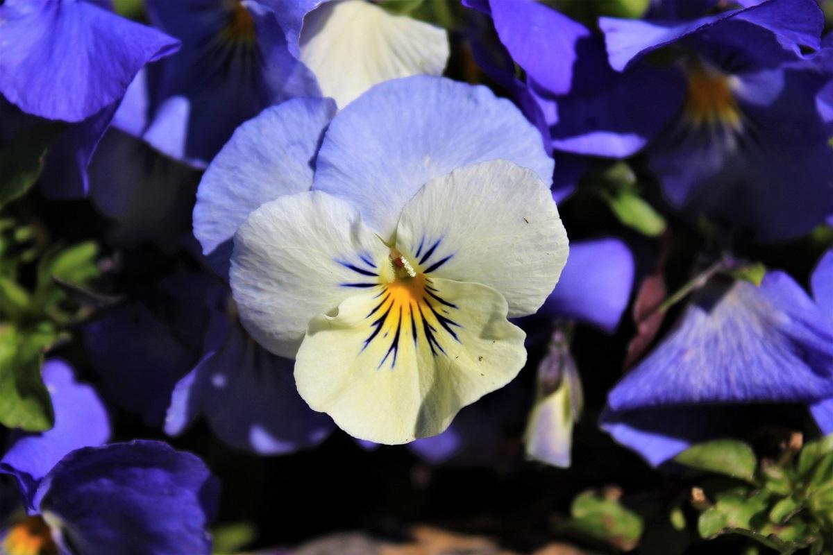 Menaggio - Menaggio-fiori-di-valery-2.jpg