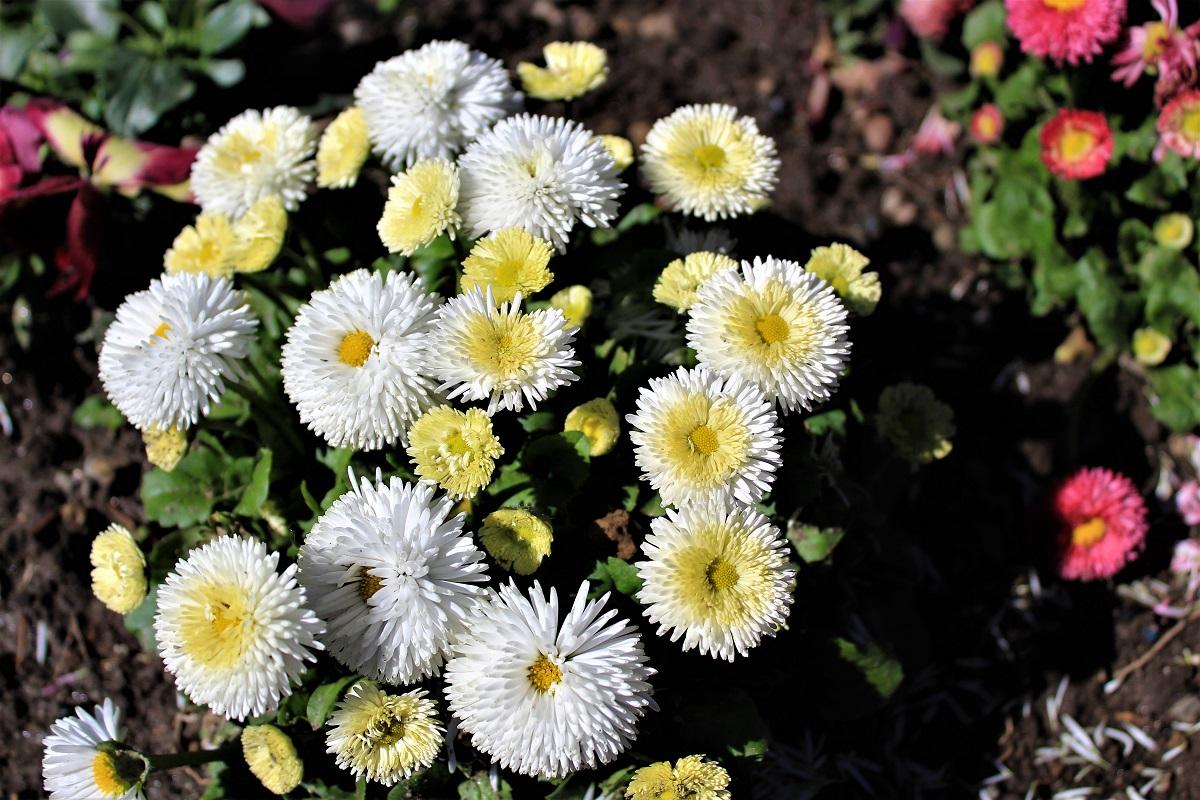 Menaggio - Menaggio-fiori-di-valery-6.jpg