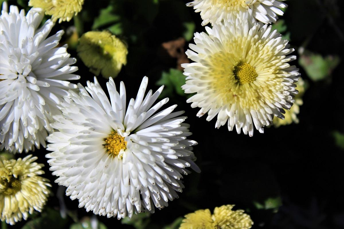 Menaggio - Menaggio-fiori-di-valery-7.jpg