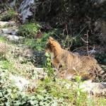 Vercurago - Santuario-San-Girolamo-gatto.jpg