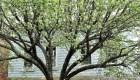 Marthas-Vineyard - Marthas-Vineyard-oak-bluff-inizio-primavera.jpg