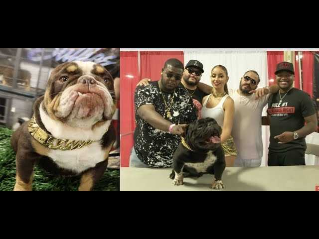 $1,000,000 DOGS! Exotic Bull Dog Show BY T.E.B.A. HOSTED BY MYA