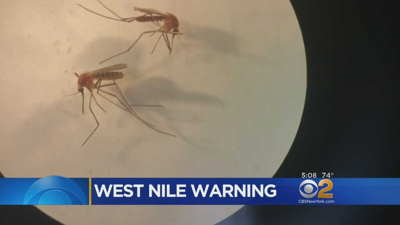 Record Number Of Mosquitoes Test Positive For West Nile On Long Island