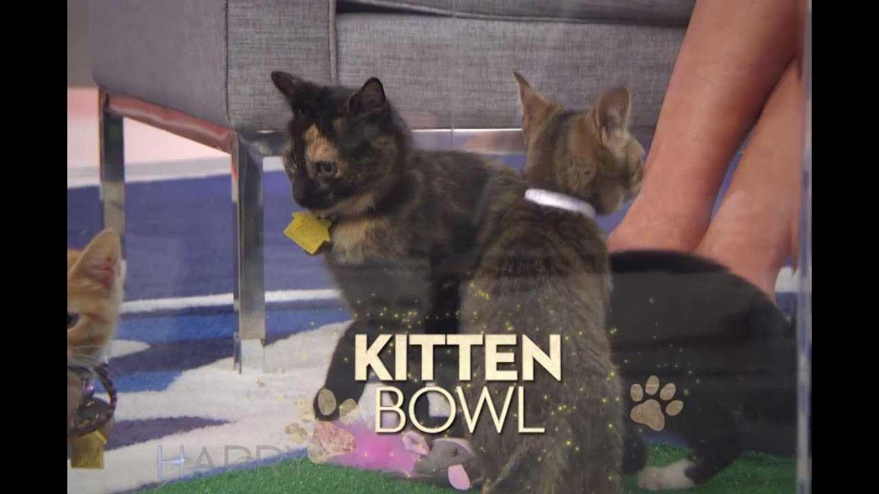 "TUESDAY: ""Kitten Bowl"" Host Beth Stern & ""The Resident"" star Matt Czuchry!"
