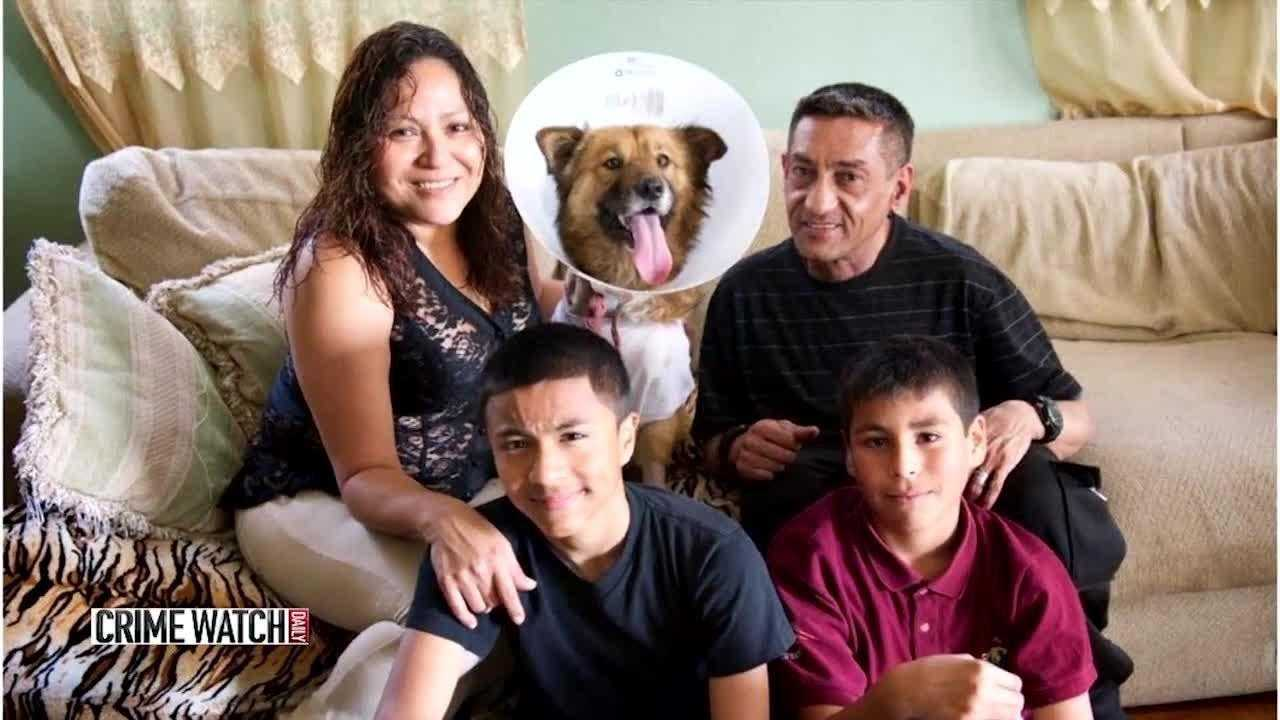 Hero dog saves family from intruder, takes bullets