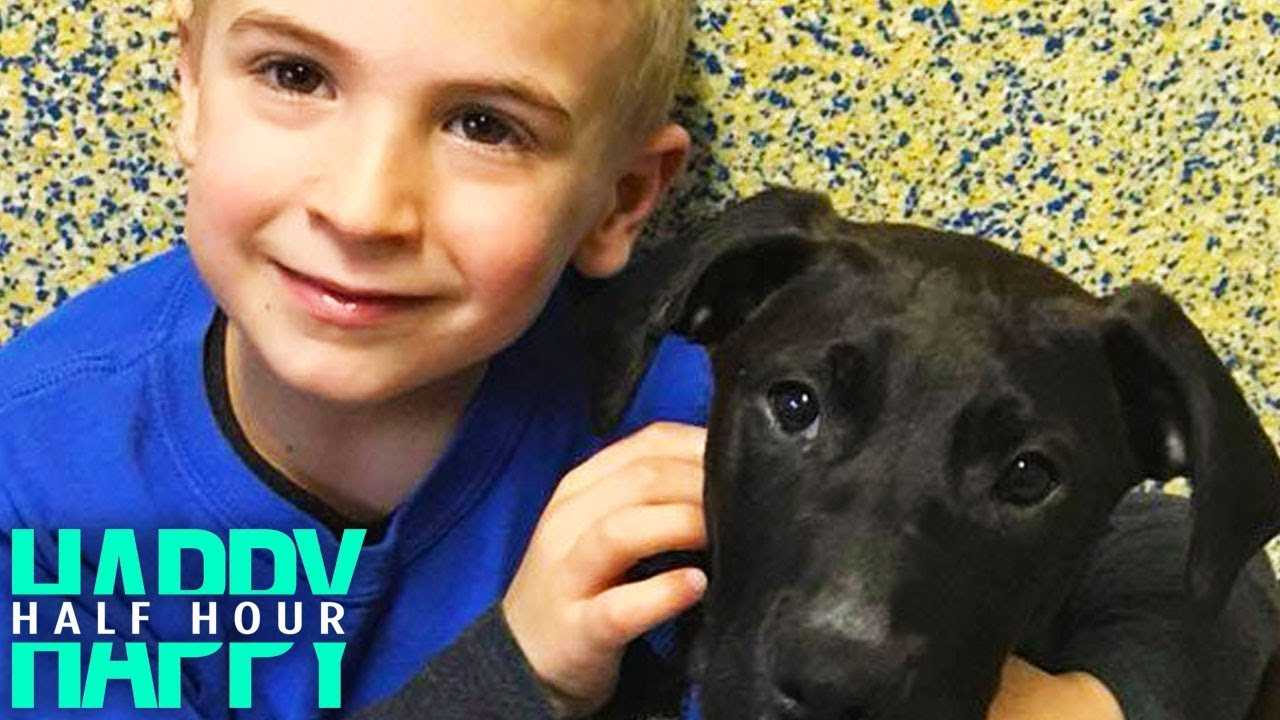 7-Year-Old Boy Rescues Over 1,000 Dogs From Kill Shelters