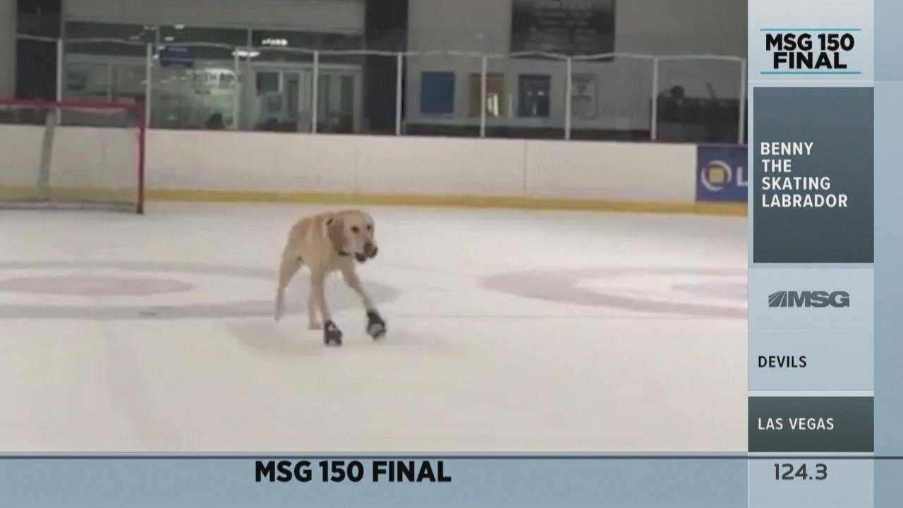 MSG 150: Benny the Skating Labrador!   New York Rangers   MSG Networks