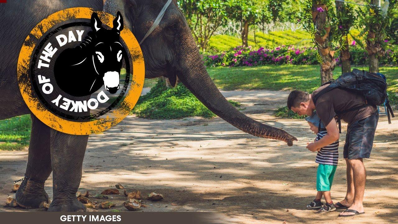 Dumb Dad Arrested After Bringing Toddler Into Elephant Habitat For Selfie Op