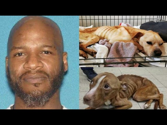 R&B Singer Jaheim Arrested for Animal Cruelty After Allegedly Starving Dogs in New Jersey Home😠😬😡
