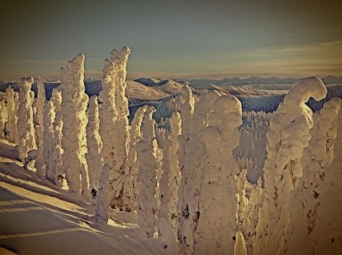 Snow Ghosts at Magic Hour
