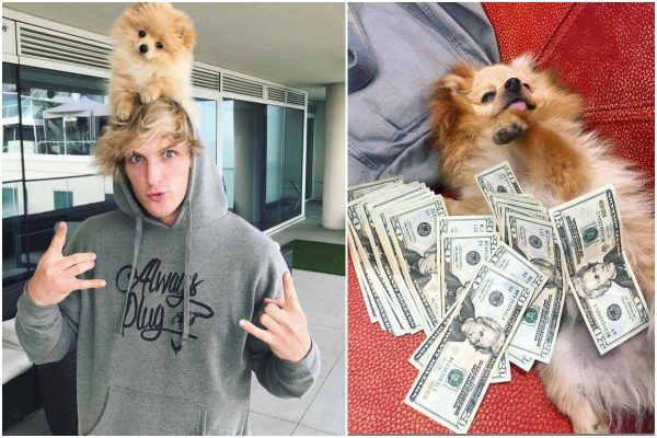 KongDaSavage dead logan paul dog dead lailasnews