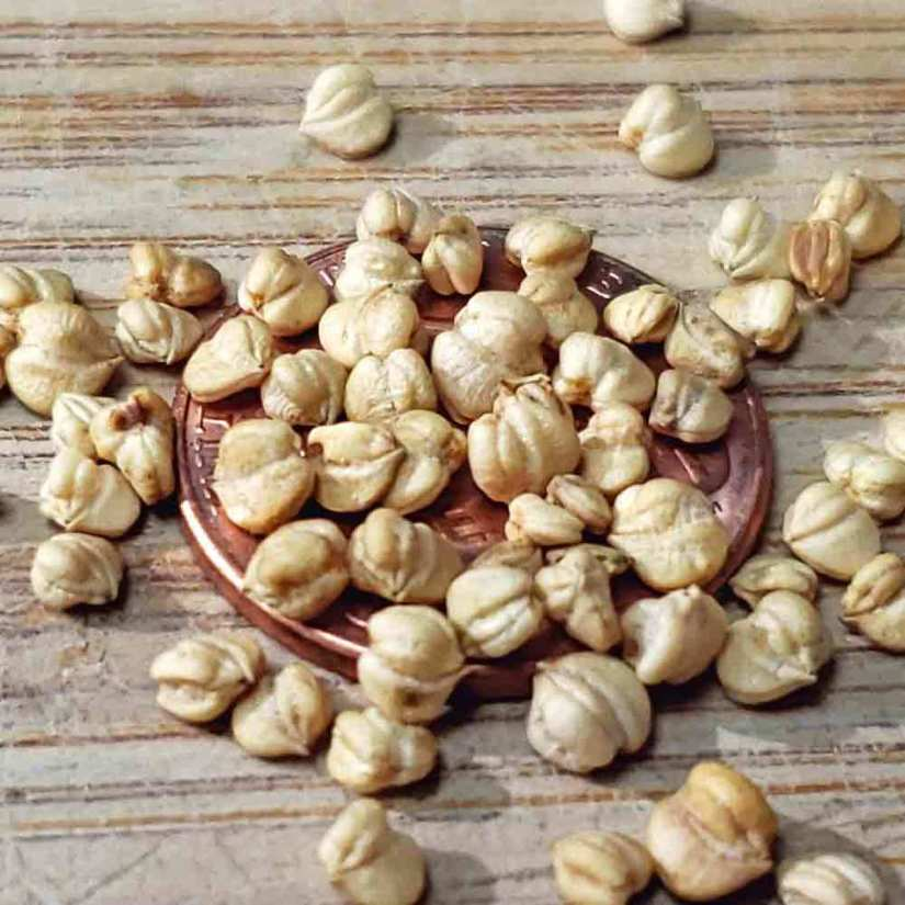 Mache seeds usually sow in early spring and harvest the baby rosettes early since it bolts in hot weather. It may also be sown in late summer for harvest through autumn until early winter.