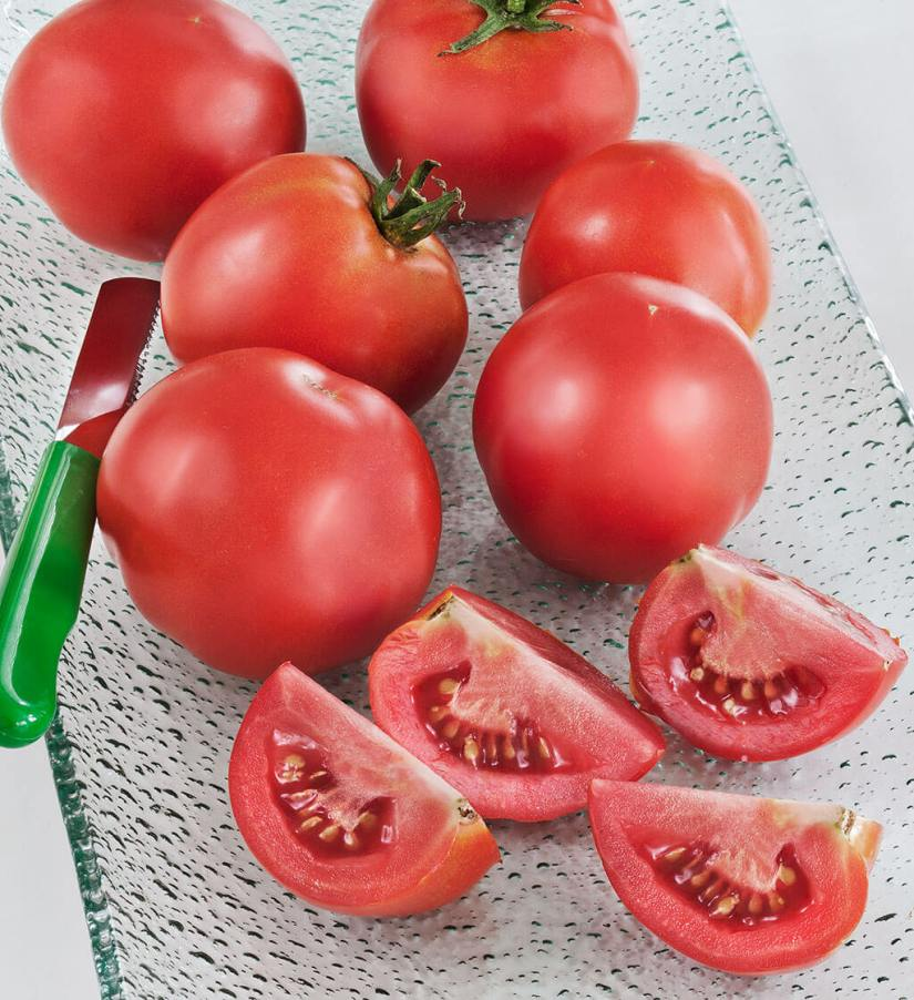 Early girl tomato is a medium sized globe type F1 hybrid that popular with home gardeners, it is produces flowers and fruit until it is killed by frost or another external factor.