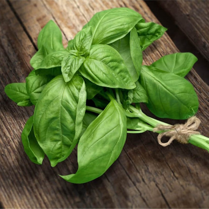 Basil is a warm-weather, fragrant herb that tastes great in many dishes including the beloved homemade pesto.