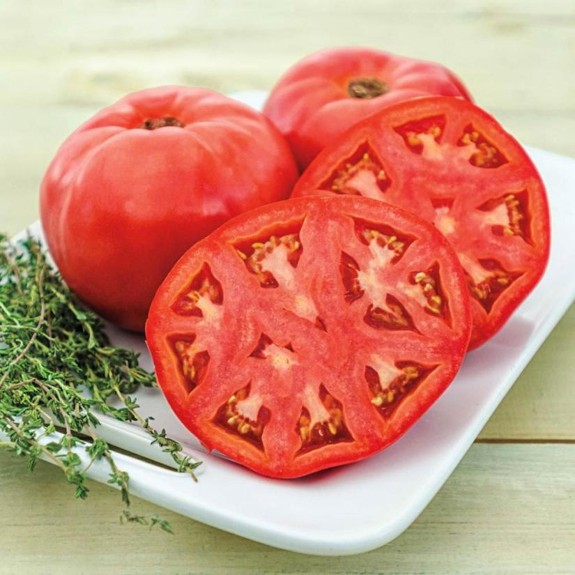 Brandywine come in different colors including red, pink, orange, yellow and even black tomatoes. Known for their huge size, great taste, and pumpkin-like ridges. Popularly considered among the best tasting available.
