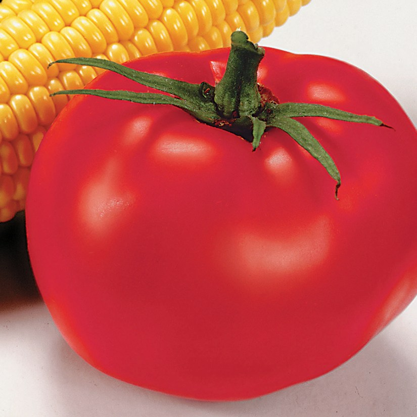 Better boy tomato noted for its superior flavor, the fruit grows from an indeterminate plant and is about 12 ounces.