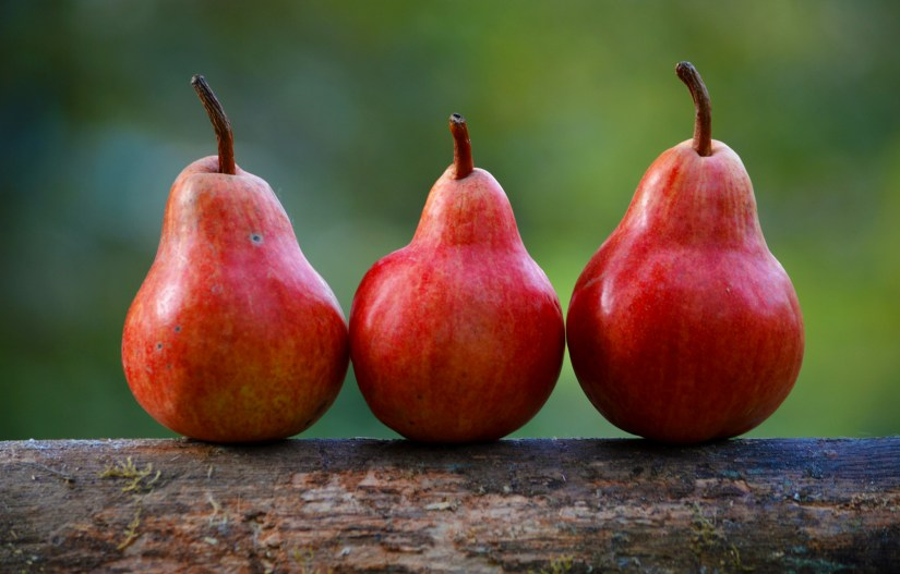 Red Anjou pears are much like their green counterparts, with the only exception being their color.