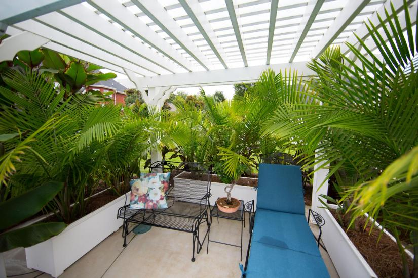 Majesty palm can also be used outdoors on shaded decks, patios, and balconies. as a summer tropical.