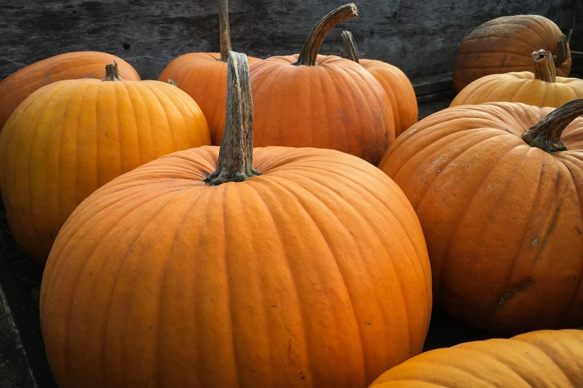 A pumpkin, from a botanist's perspective, is a fruit because it's a product of the seed-bearing structure of flowering plants. Vegetables, on the other hand, are the edible portion of plants such as leaves, stems, roots, bullbs, flowers, and tubers.