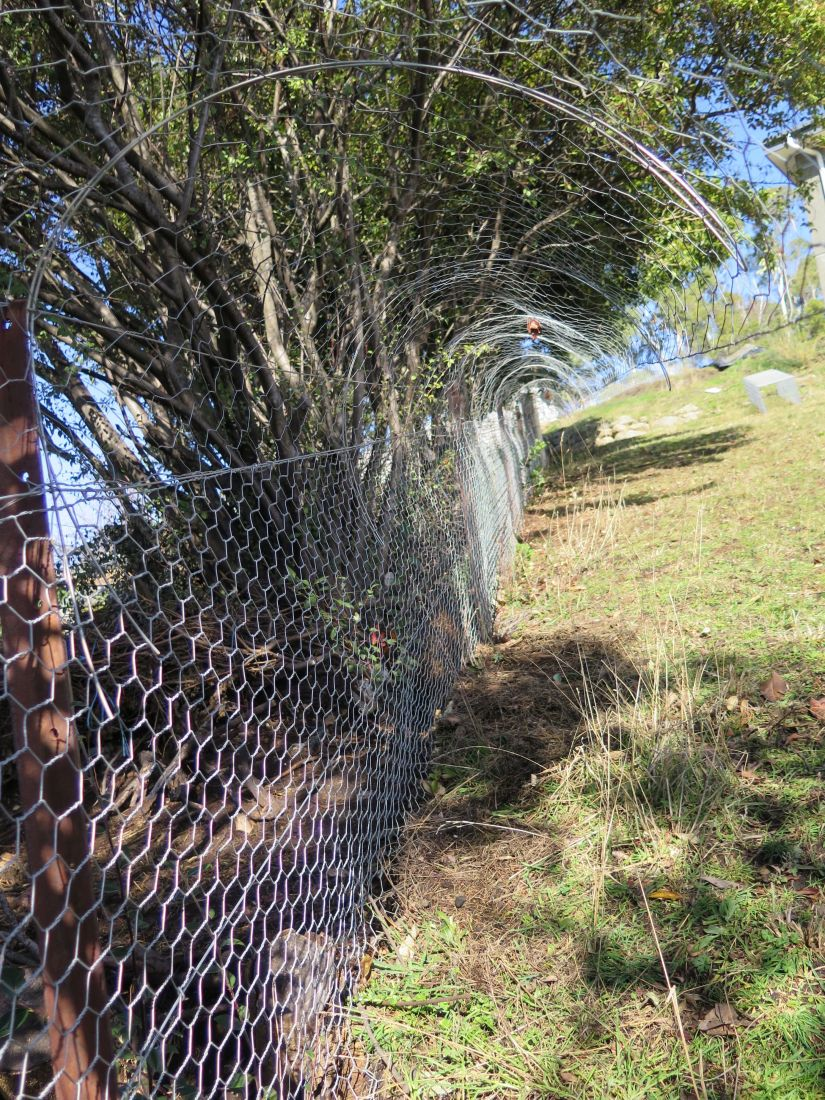 Many gardener are using the Electric Fences to keep possums and other pests away from gardens and the like. It is important to note that in this instance, it is far better to choose a pulsating electric fence rather than a constant current style fence.