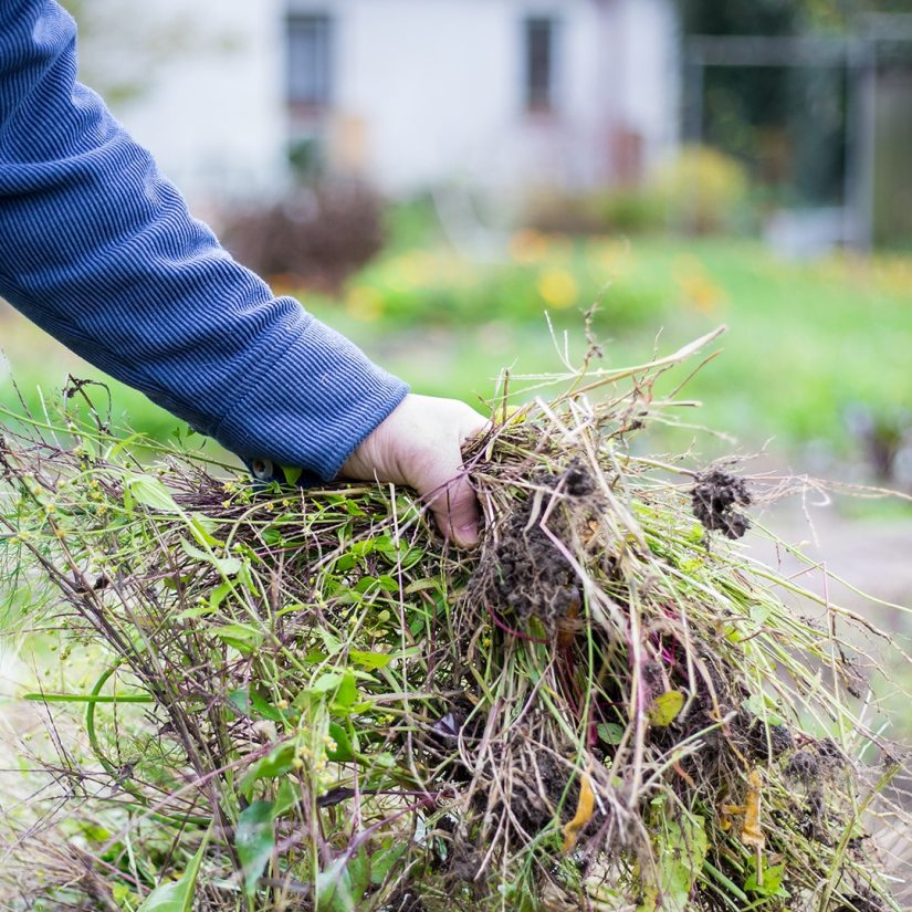 Keep your garden clean is the best way to prevent your plant from any pests that can harm your plant.