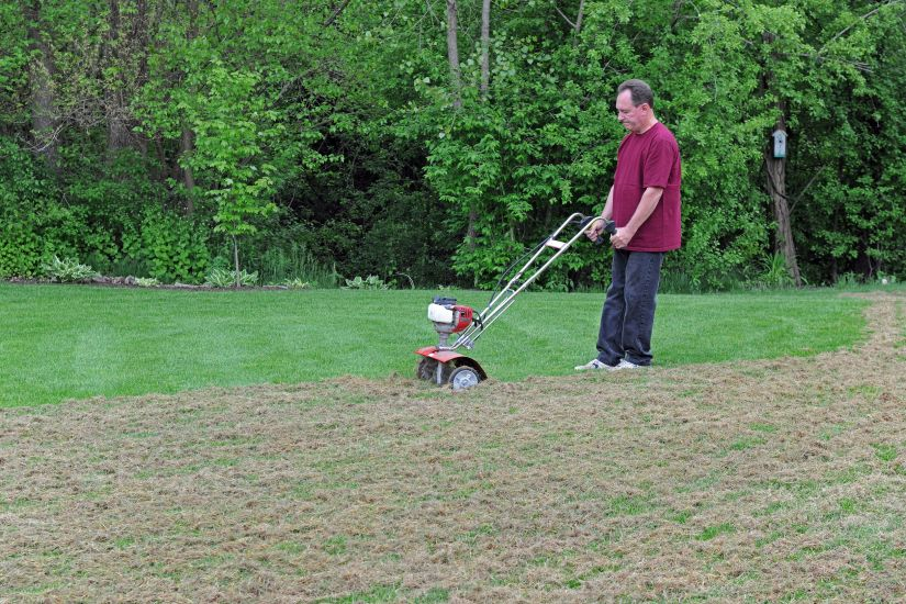 The grass needs sunlight, but cutting it too short allows too much sunlight to reach the soil in which it grows, and that's where the problems begin. At the other extreme, allowing your lawn to get too tall between mowings can make your grass a better home for all types of pests, including insects.