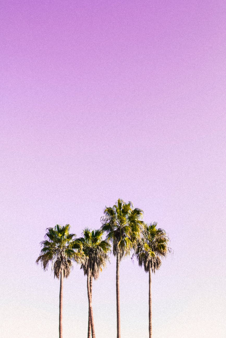 landscape photography of four coconut trees