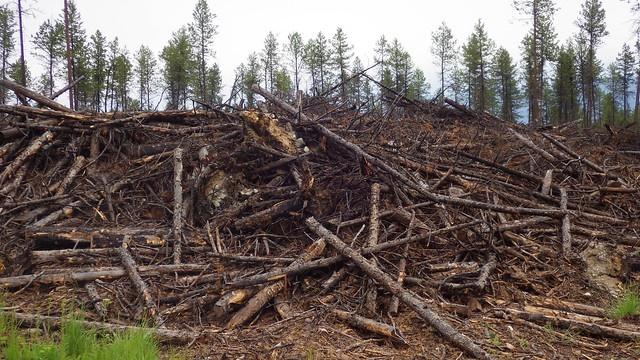 Biochar Forest trees