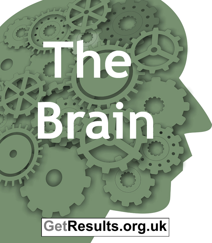 Get Results: The Brain