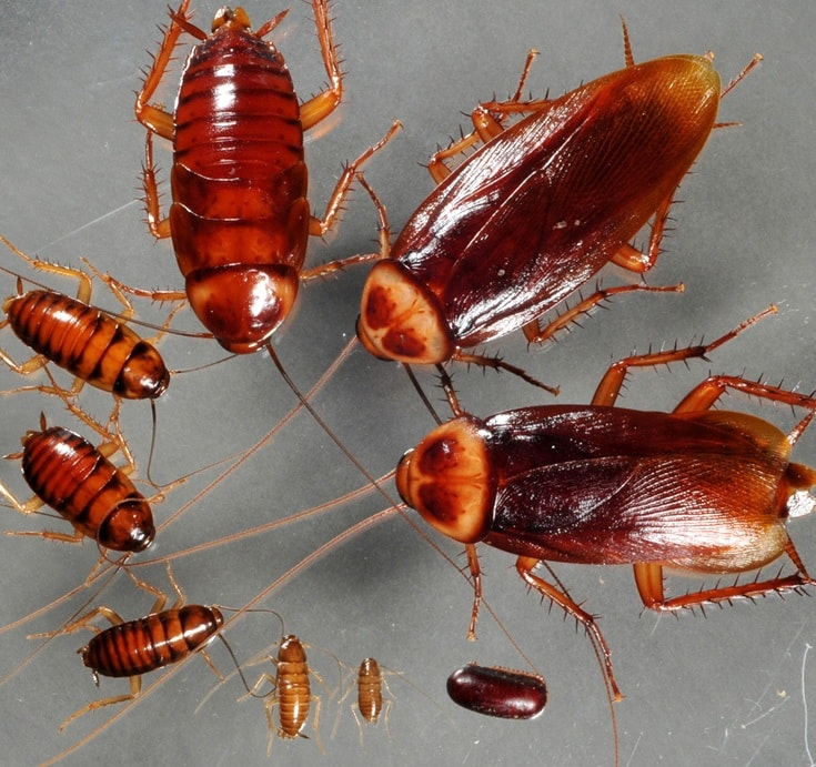 How I Found The Best Way To Get Rid Of Roaches
