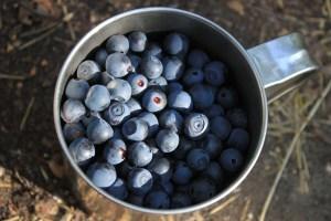How Safe Are GMOs?
