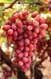 5 Health Properties Found in Fresh Fruit