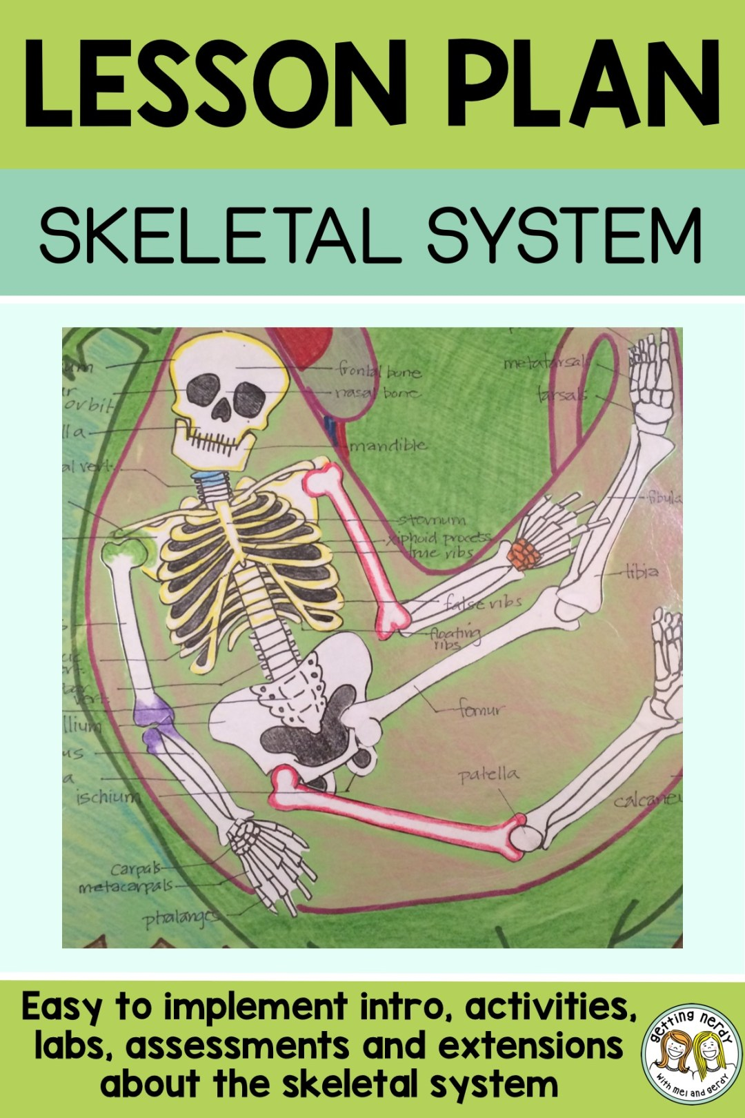 This is one of the best skeleton projects I used to teach the skeletal system #gettingnerdyscience #skeletalsystem #sciencelessonplan