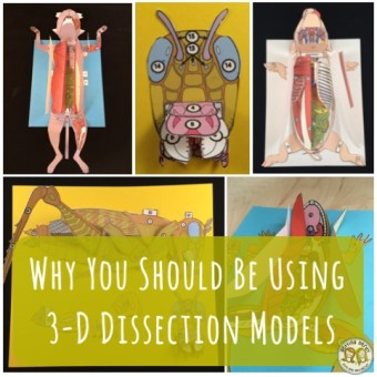 Why you should use Paper Scienstructable 3D Dissection Models for Life Science and Biology