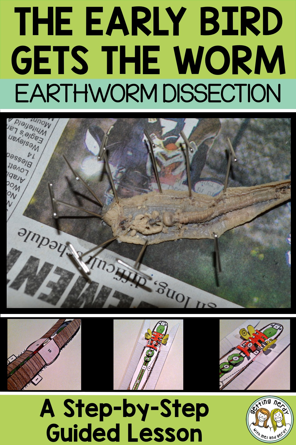 Lesson Plan Earthworm Dissection For Secondary Grades