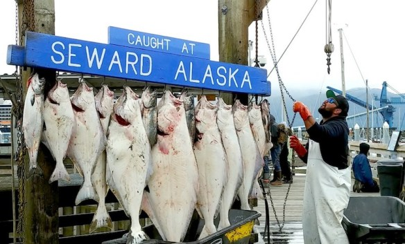 A nice catch in Seward on the Kenai Peninsula