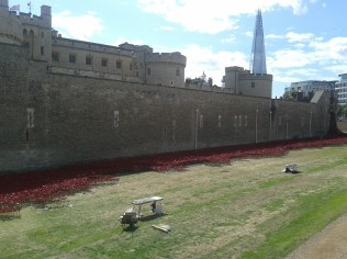 Tower Hill - growing poppies