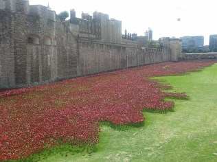 Tower Hill - poppies