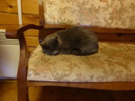 Snuggly hostel cat
