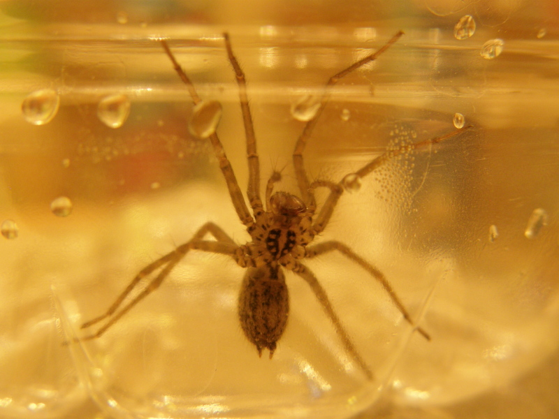 Spider...bottom very clear