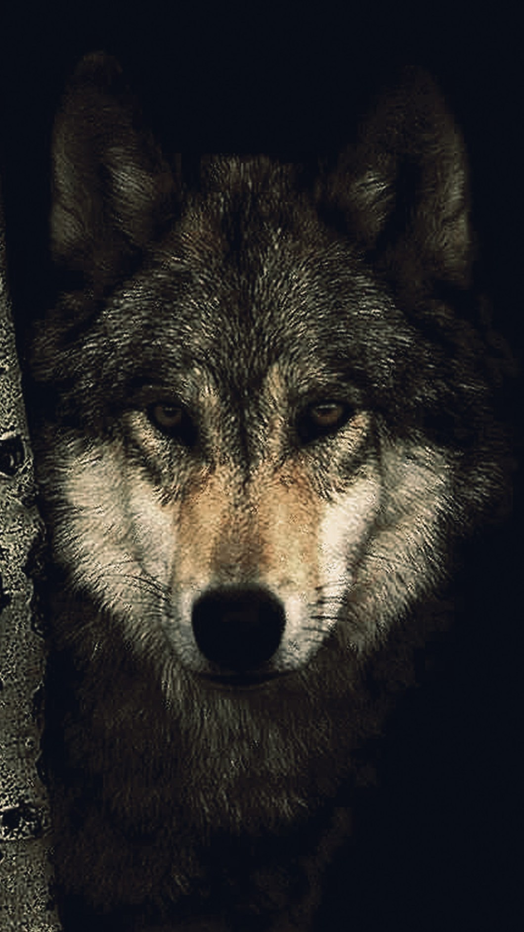 Wolf Wallpaper 4k Iphone Bestpicture1 Org