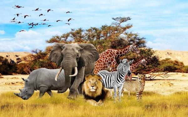 Safari Animal Wallpaper (60+ images)
